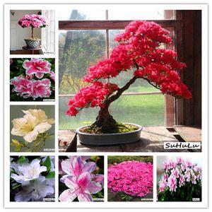 300 Pcs bag Japanese azalea Bonsai seeds, rhododendron azalea,azalea flower Bonsai tree Seedling DIY plant home garden Easy to Grow