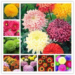 1000 semi pezzi borsa Ground Cover crisantemo giardino, cinese Aster perenne Bonsai Fiore Flores Margherita Pianta in vaso per il giardino domestico