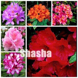 Satış! 200 adet / torba Tohumlar Japon Rhododendron Bonsai, Rhododendron Azalea Açık Çiçek Bonsai Ağacı DIY Bitki Ev Bahçe Kolay Grow