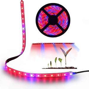 5M / 16.4ft 스트립 LED는 실내 식물 정원 온실 수경 시스템 키트 라이트 바 유연한 소프트 스트립 조명 DC12V 성장