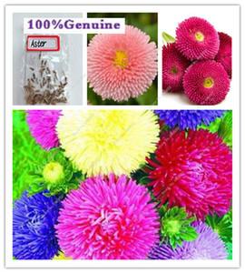 200pcs Semi Aster Alto Paeony Albicocca fiori recisi Splendida Bonsai piante perenni per la casa Garden Courtyard
