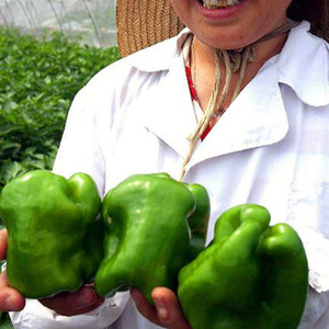 Wholesale Giant Chili Pepper Seeds Marconi Diy Home Garden Plants And Garden Vegetable Garden pack Potted Plants Sweet Pepper Seeds