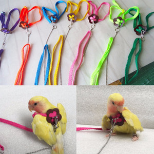 Wholesale Let's Pet Colorful Parrot Bird Leash Outdoor Adjustable Harness Training Rope Flying Cross Band