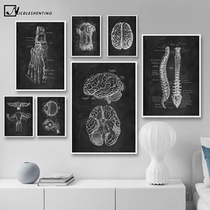 Wholesale human organs body resale online - Human Anatomy Artwork Medical Wall Picture Skeleton Organ Muscle System Vintage Poster Canvas Print Body Education Painting