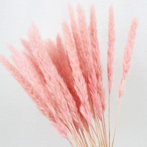 Wholesale tall grasses resale online - 15PCS Natural Dried Small Pampas Grass Phragmites Wedding Flower Bunch To Cm Tall for Hotel Home Decor Q531