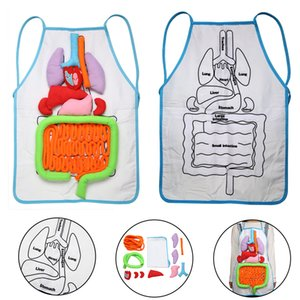 Wholesale human organs body for sale - Group buy Anatomy Apron Human Body Organs Awareness Educational Insights Apron Toys Preschool Home Teaching Aids For Children Kids C0127
