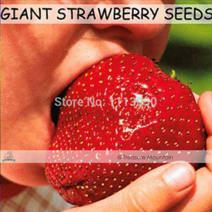 Free shipping 300 Seeds   Pack, Super Giant Strawberry Fruit Seed Apple Sized