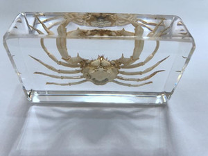 Wholesale FREE SHIPPING yqtdmy Hand Crab in Clear Block Education Fashion Specimen