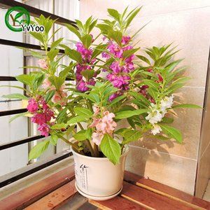 Wholesale impatiens seeds resale online - MIX Impatiens Seeds Flower Pot Planters Garden Bonsai Flower Seed Particles P015