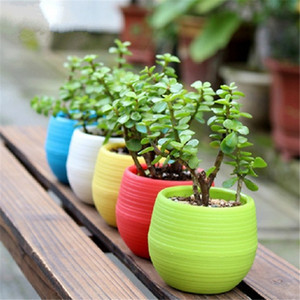 Wholesale Colorful Mini Flower Pots Planting Pot Gardening Plastic Pots Plant Flowerpot Office Decoration Garden Supplies OOA1571