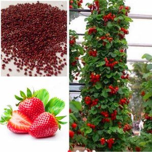 Wholesale 50pcs bag strawberry seeds giant strawberry Organic fruit seeds vegetables Non GMO bonsai pot for home garden plant seeds