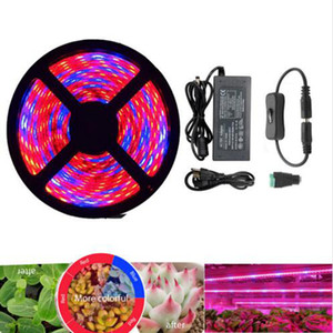 Wholesale Plant Grow lights Full Spectrum LED Strip Grow light Flower phyto lamp m Waterproof Red blue for Greenhouse Hydroponic Power adapter