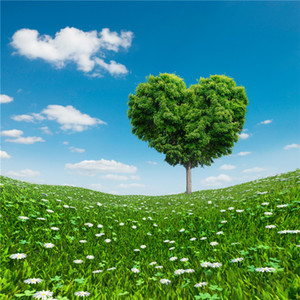 Wholesale Love Heart shaped Tree Valentines Day Backdrops Blue Sky Clouds Green Grassland White Flowers Spring Scenic Wedding Photography Backgrounds