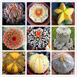 Wholesale 200 Rare Mix Lithops Seeds Living Stones Succulent Cactus Organic Garden Bulk Seed bonsai seeds for indoor succulent plants