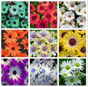 100 Pcs Bag African Chrysanthemum African Rare Blue Eyed Daisy Seeds Bonsai Or Pot Flower For Home & Garden Plant