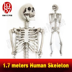 New decoration for escape rooms 1.7 meters Skeleton plastic Skeleton emulational decoration Halloween and terror theme jxkj1987 chamber