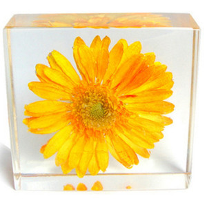 Wholesale Acrylic Resin Embedded Real Flower Yellow Chrysanthemum Specimen Indoor Decorative Crafts Paperweight Wedding Dinner Display Gifts Toys