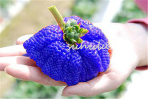 Wholesale 300 bag giant strawberry seeds blue strawberry Organic Heirloom sweet fruit vegetable seeds bonsai potted plant to kids for home garden