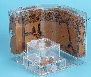 New Transparent Ant House Fill Clay Sand Ants Farm Insect Nest Ecology Mania Home Habitat Professional Castle Maze Ant Villa on Sale