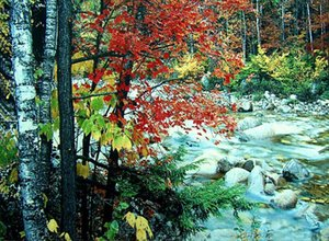 Wholesale different sizes fabric picture frame wall gobelin tapestries beautiful red Maple leafs beside river picture