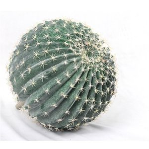 Large Fake Cactus Ball Shape Plastic Artificial Succulent Plants Cactus Home Garden Decoration Green Natural Plants Cactus Decor