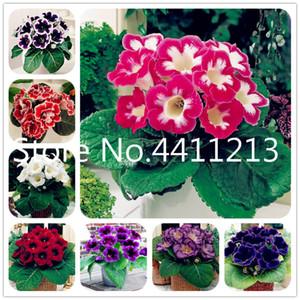 Big Sale! 200 pcs bag Gloxinia Flower Perennial Flowering Plants mixed color flower Bonsai plant seeds Sinningia Speciosa Bonsai Balcony