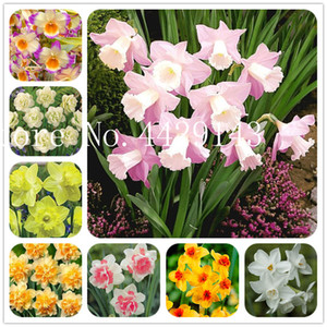 Wholesale narcissus flowers resale online - Double Bag Seeds Grow Plants Flower Easy Flower Bonsai Narcissus Petals Aquatic Garden Plant Bonsai To Daffodil Fxpjr
