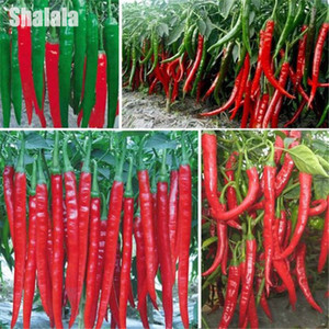 Wholesale 200 Seed Giant Spices Spicy Red Chili Hot Pepper Potted Bonsai Garden Plant Seeds Vegetables Seasoner Balcony Plants