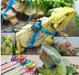 Free Shipping Adjustable Reptile Lizard Harness Leash Adjustable Hauling Cable Rope walking cabrite lizards lead on sale on Sale