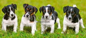 Wholesale Dogs Baby D Diy Diamond Painting Cross Stitch Diamond Embroidery Jack Russell Terrier Animals Hobbies Crafts Mosaic Home Decor