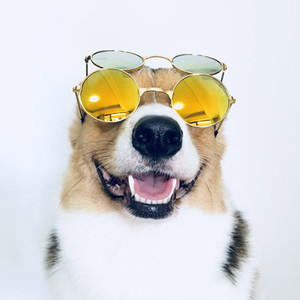 gafas de sol para perros pequeños al por mayor-OG Fashion Glasses Gafas de sol Accesorios Eyewear Pet Dogs Cats Small Funny para fotos grandes Props Año de perro Dog Party Dress Up Access Ca Kiei