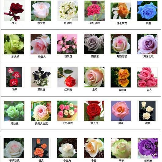 30 tipi Multi-colour totale 300 semi colorati semi di fiori rosa rare arcobaleno rosa semi di fiori pianta casa giardino bonsai