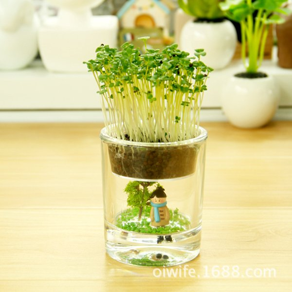 Wholesale office mini potted anion air purification plant pot fairy cup factory direct