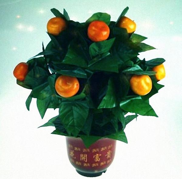 10 Blooming Oranges