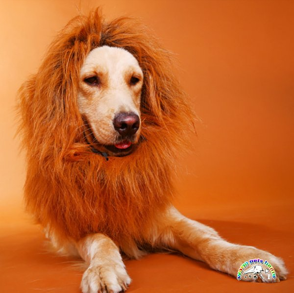 Fashion Black Brown 3 Colors Pet Costume Large Dog Halloween Clothes Lion Hair Mane Funny Dog Wig With Ear