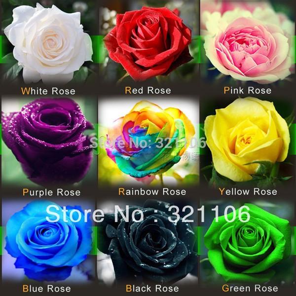 O ENVIO GRATUITO de 1800 Sementes Rose Sementes Incluem Rosa Preto Branco Vermelho Roxo Verde Amarelo Azul Cores