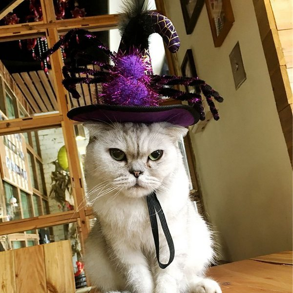 Gatito lindo del gato de Cosplay del traje de araña calabaza del sombrero del casquillo del animal doméstico divertido de Halloween de Navidad del vestido de lujo hasta para Mascotas