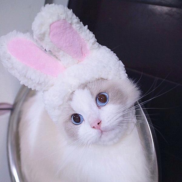 Горячей Продажа Cat ToysCat капот милого кролик костюм шапка кошка головной убор показать реквизит смешного животного шляпа уши кролика Cat Supplies