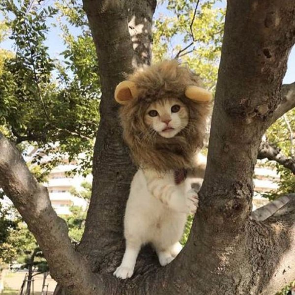 cute pet cap cosplay costume lion shape hat doggy kitty lion mane hat comfortable cat soft puppy wig breathable animal cap