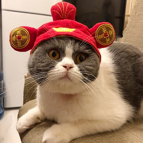 halloween funny pet dog caps lion hair mane ears head cap party cosplay dress up hat pet cat puppy teddy head wear accessories
