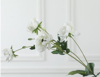 kremsi beyaz