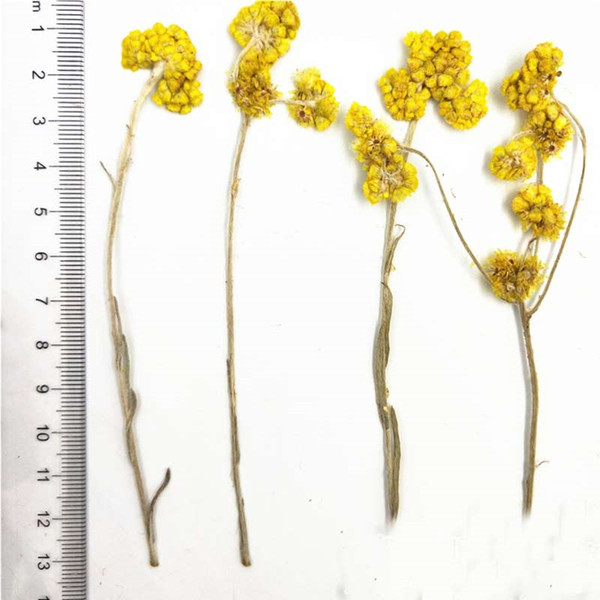 Kindergarten Handmade Epoxy Pressing Flower Bookmark Dried Flower Art , Dried Plant For Candle Ornaments 100 Pcs Per Lot Free Shipment