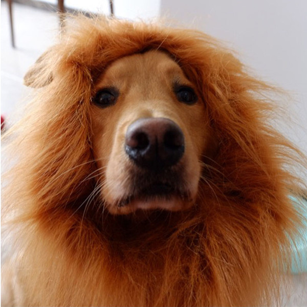 2019 INS 2 Colors Dog Lion Wig Hair Ornaments Halloween Costume Pet Appeal Large Breed Dress Up