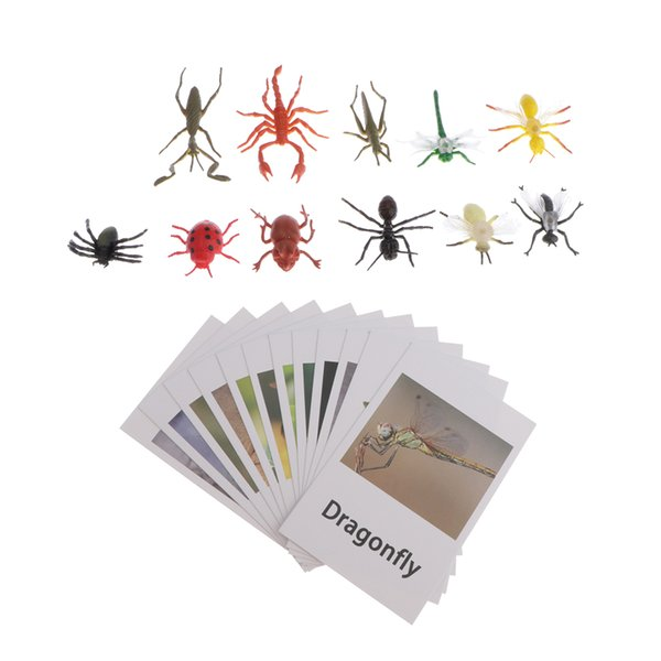 best selling Education Toy Insects Animals Model Naming Cards For Montessori Education