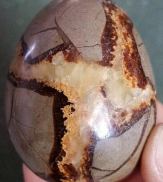 Crystal Shipping>Natural Septarian Dragon Crystal Egg Stone Specimen