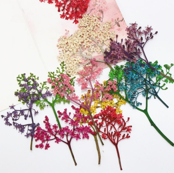 120pcs Dried Flower Preserved adnate elder herb For Epoxy Resin Jewelry Making Postcard Frame Phone Case Craft DIY