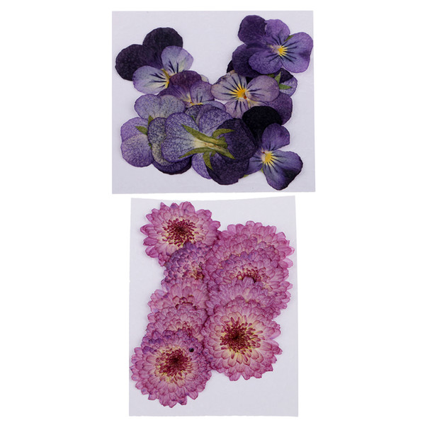 22pcs Gerçek Papatya Pansy Çiçekler DIY Çiçek Dekor Bezeme Kurutulmuş preslenmiş