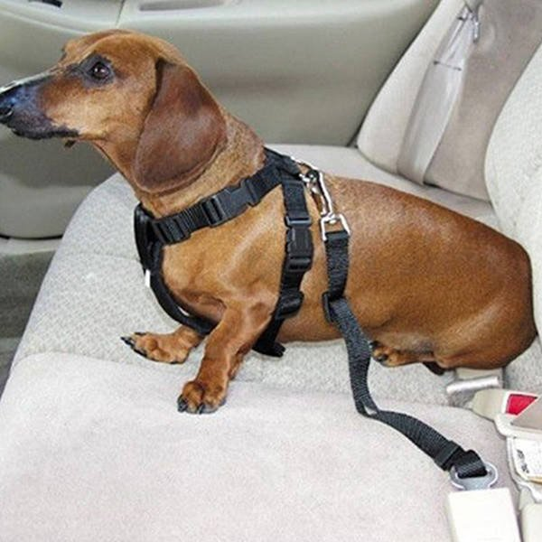 Dog Car Safety >> 2019 Adjustable Dog Car Safety Seat Belt Nylon Pets Puppy Seat Lead Leash Harness Vehicle Seatbelt Tc190311 From Topteam 1 33 Dhgate Com
