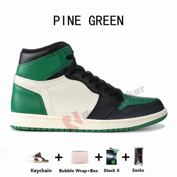 1S-الصنوبر الخضراء