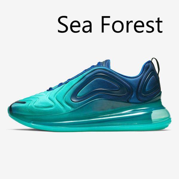 Forêt de mer